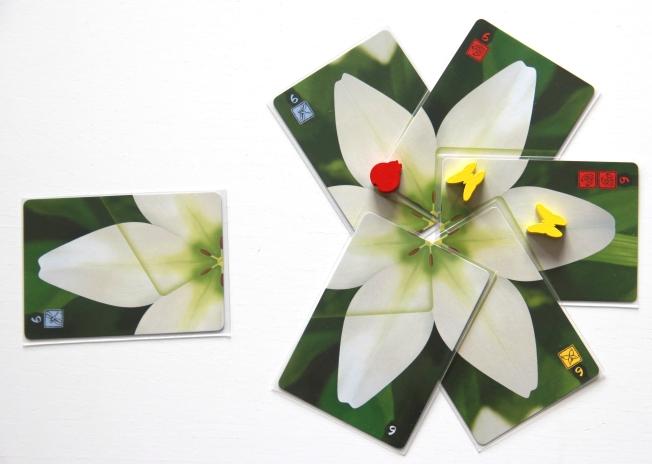lotus-07